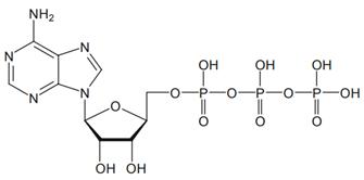 wiazanie chemiczne atp